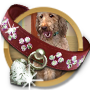 Doggone Dog Questline-icon