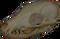 HO StillLife Skull-icon