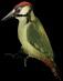 File:HO RomanyCamp Woodpecker-icon.png