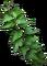 HO BriggsRoseGarden English Ivy-icon