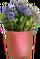 HO NursR Violets-icon