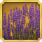 Quest Task Lavendar-icon
