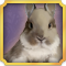 Quest Task Get Bunny-icon