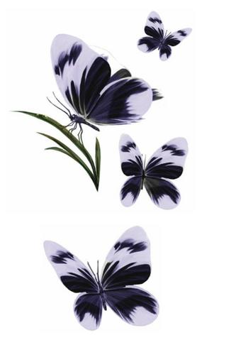 Archivo:Naath Butterflies by Arthur Bozonnet©.png