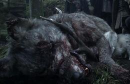 Lobo huargo muerto HBO.jpg