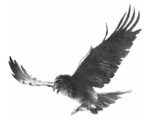 Archivo:Crow by Douglas Wheatley©.jpg