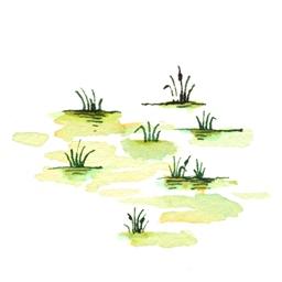 File:SwampB9 (2).jpg