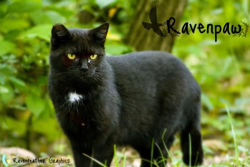 File:Ravenstar.jpg