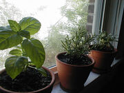Herbage
