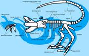 Aurixan Skeletal Diagram