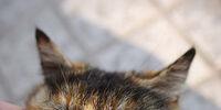 Leopardnose