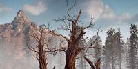 Three Dead Trees
