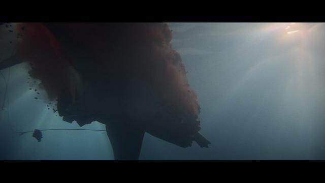 File:Shark death.png