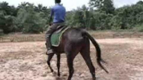 DP Equine - Horse riding in Johore, Malaysia.