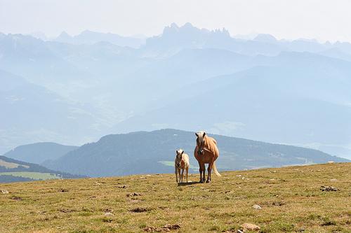 File:Horses on Villanderalm.jpg