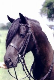 Forelock horse