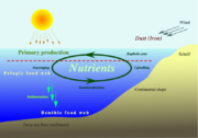 Nutrient-cycle hg