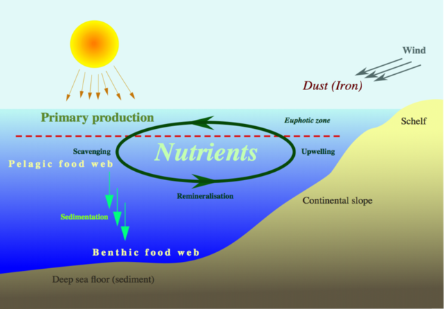 File:Nutrient-cycle hg.png