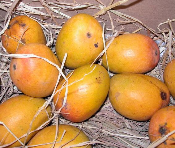 File:Alphonso mango.jpg