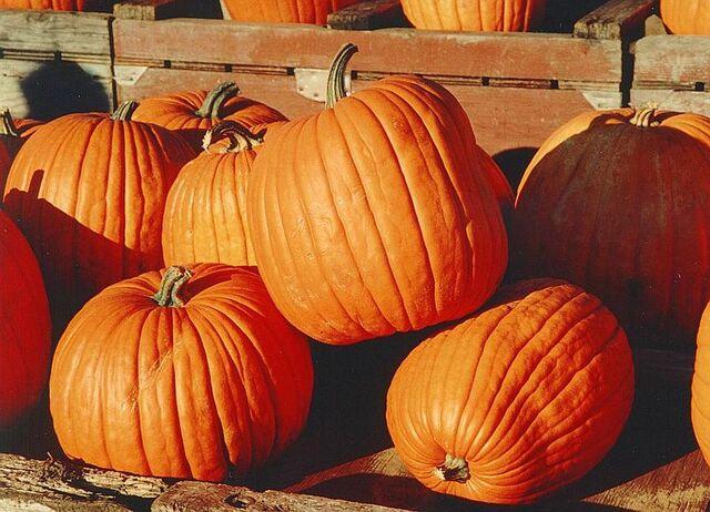 File:800px-Pumpkins.jpg