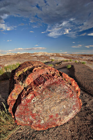 File:Petrified forest log 1 md.jpg