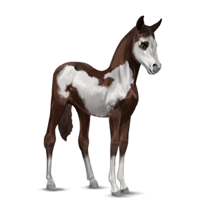 File:Paint Horse Foal - Liver Chestnut Overo.png