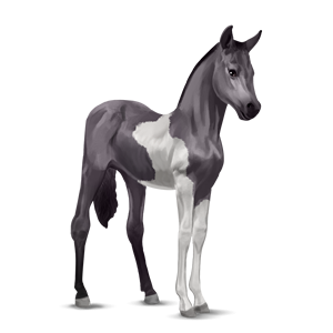 File:Paint Horse Foal - Mouse gray Tobiano.png