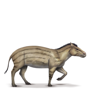 Hyracotherium.png