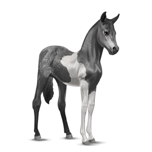 File:Paint Horse Foal - Dapple Gray Tobiano.png