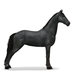 Tennessee_Walker_Rappe.png