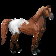 Mustang Schabrackenfuchs Alt