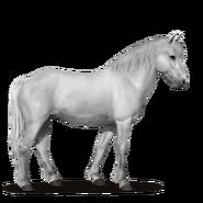 Neufundland Pony.Hellgrau