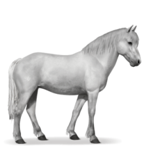 Neufundland Pony.Hellgrau.png