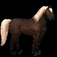 Mustang Dunkelfuchs mit heller Mähne Alt