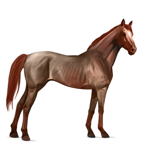 Datei:Strawberry Roan, Pferd.png