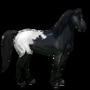 Mustang Schabrackenrappe Alt