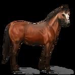 Quarter Horse.Rotbrauner.Altes Design