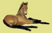 Don Pferd Alte Grafik 1 Fohlen Falbe