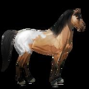 Mustang Schabracken-Falbe Alt
