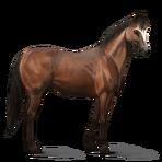 Quarter Horse.Brauner.Altes Design