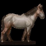 Nokota Pferd Roan