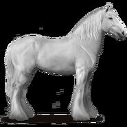 Shire Horse Schimmel