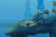 Deflated Pufferfish