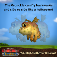 Baby Gronckle Promo