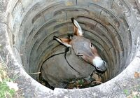 Donkey in well