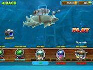 Baby Reef Shark