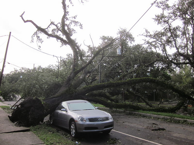 File:Issac Tree on Car 1.png