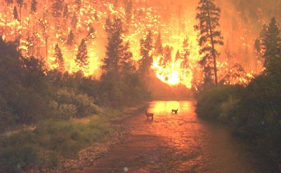 File:Wildfire-deer.jpg