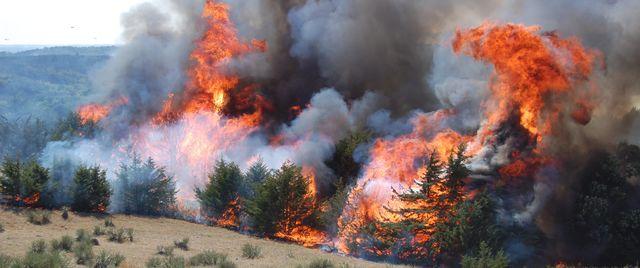 File:Wildfire (6).jpg