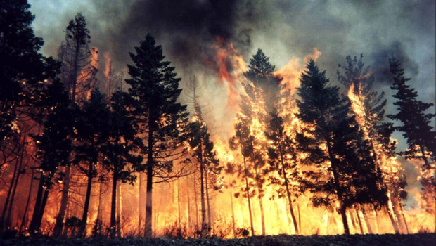File:Wildfire.png